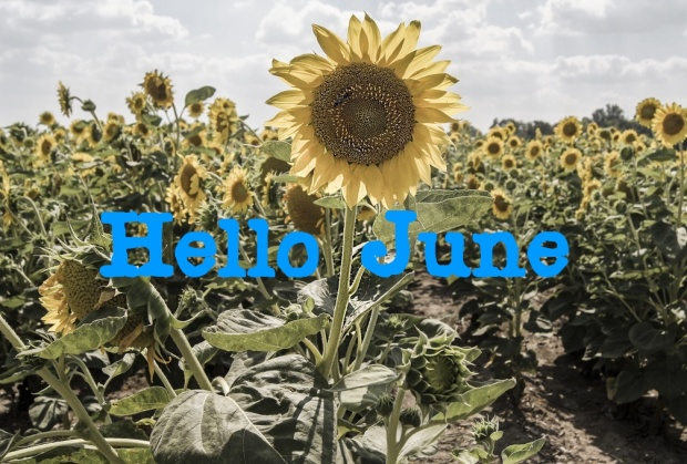 hello june sunflower
